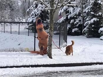 Snow-magedden 2019
